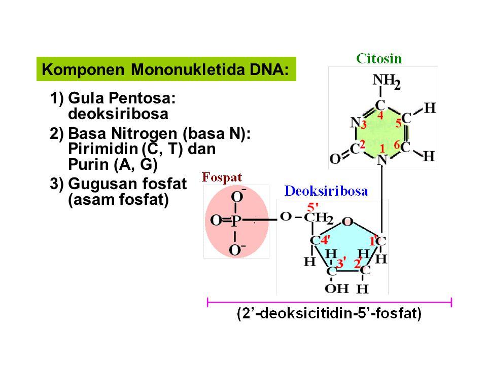 Komponen Mononukletida DNA: