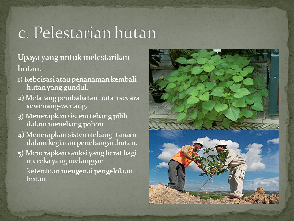 c. Pelestarian hutan Upaya yang untuk melestarikan hutan: