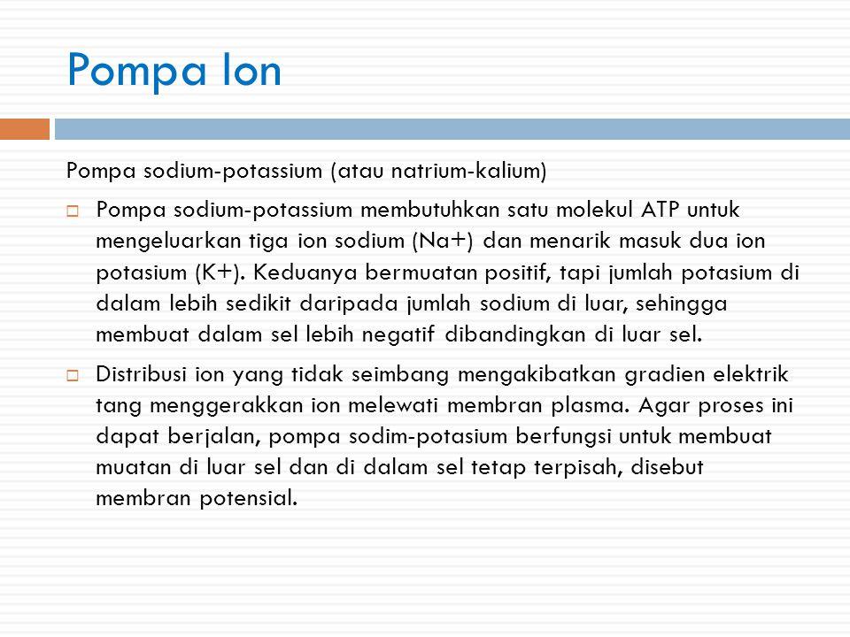 Pompa Ion Pompa sodium-potassium (atau natrium-kalium)
