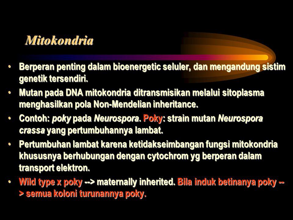 Mitokondria Berperan penting dalam bioenergetic seluler, dan mengandung sistim genetik tersendiri.