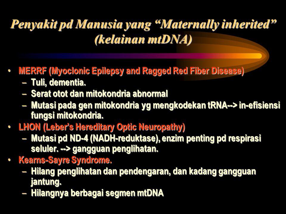 Penyakit pd Manusia yang Maternally inherited (kelainan mtDNA)
