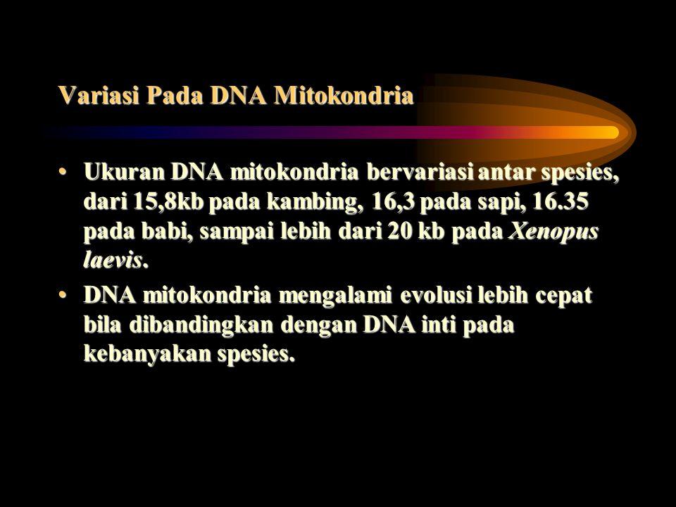 Variasi Pada DNA Mitokondria