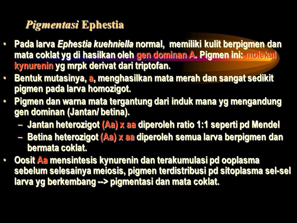 Pigmentasi Ephestia