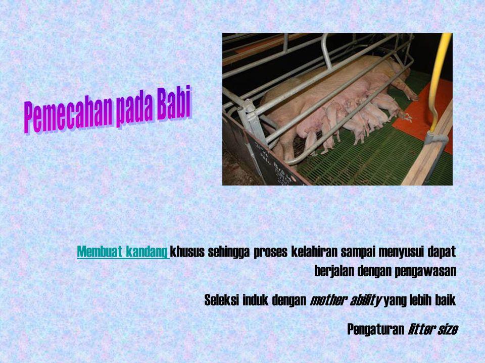 Pemecahan pada Babi Membuat kandang khusus sehingga proses kelahiran sampai menyusui dapat berjalan dengan pengawasan.