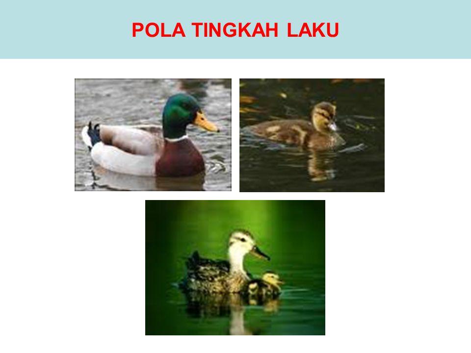 POLA TINGKAH LAKU