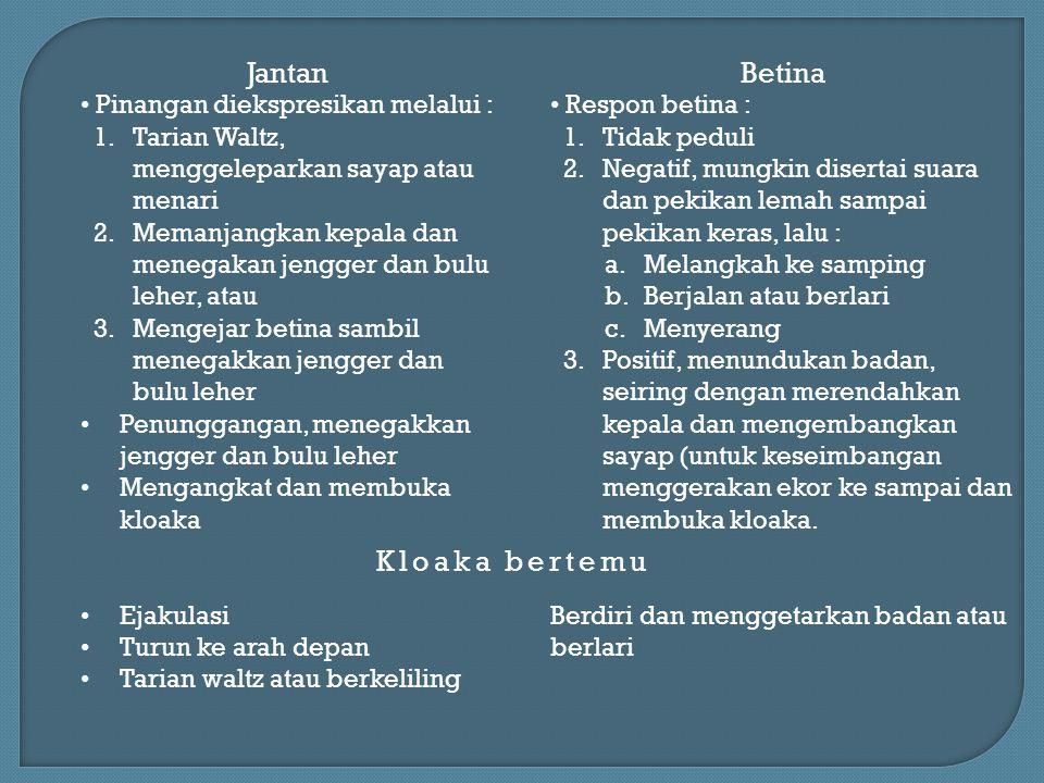 Jantan Betina Kloaka bertemu Pinangan diekspresikan melalui :