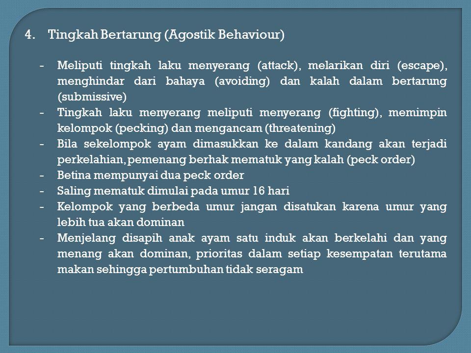 Tingkah Bertarung (Agostik Behaviour)