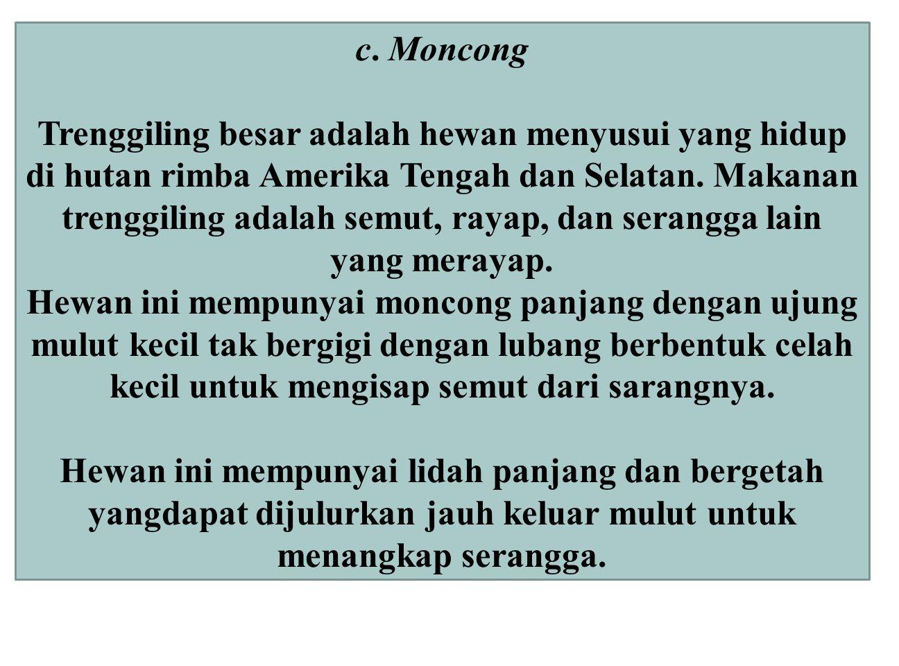 c. Moncong