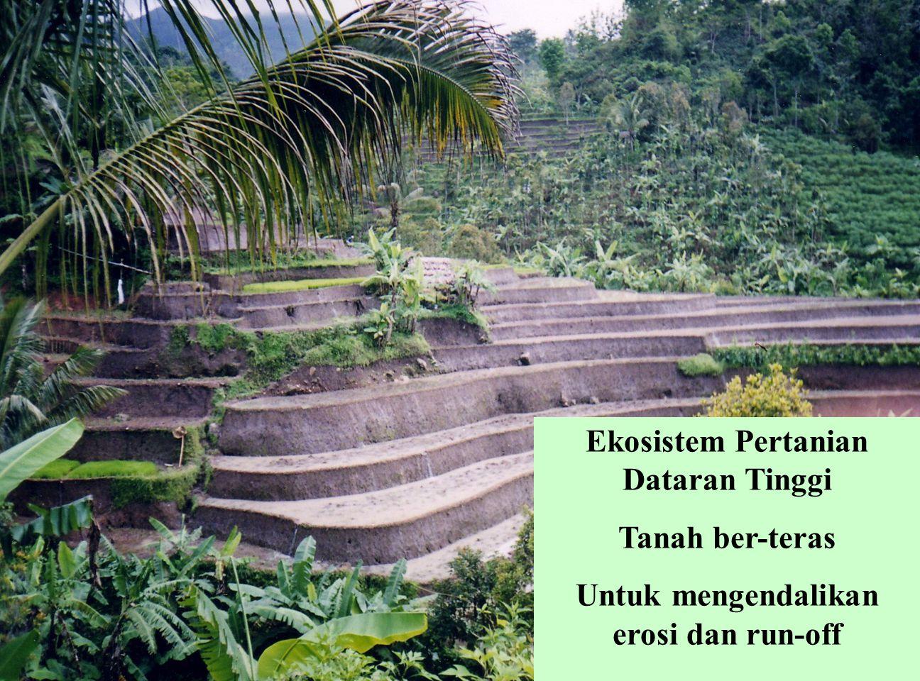 Ekosistem Pertanian Dataran Tinggi Tanah ber-teras