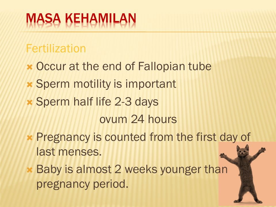 Masa kehamilan Fertilization Occur at the end of Fallopian tube