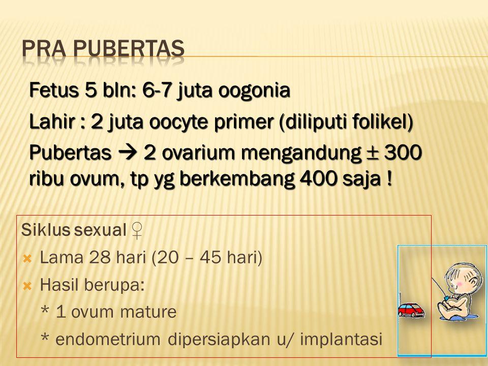 Pra pubertas Fetus 5 bln: 6-7 juta oogonia