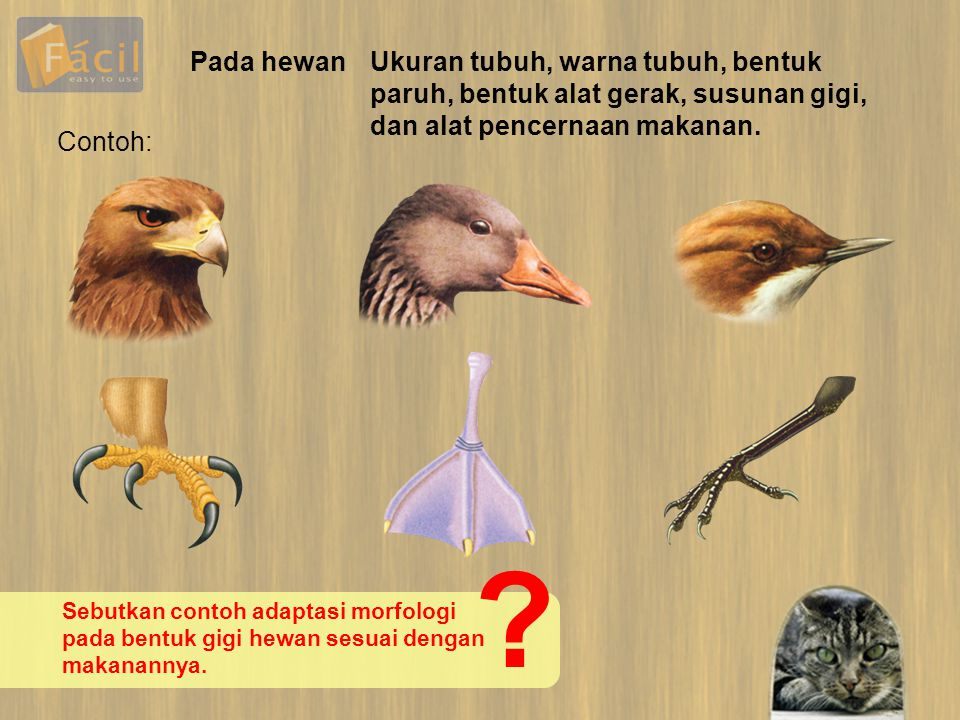Pada hewan Ukuran tubuh, warna tubuh, bentuk paruh, bentuk alat gerak, susunan gigi, dan alat pencernaan makanan.