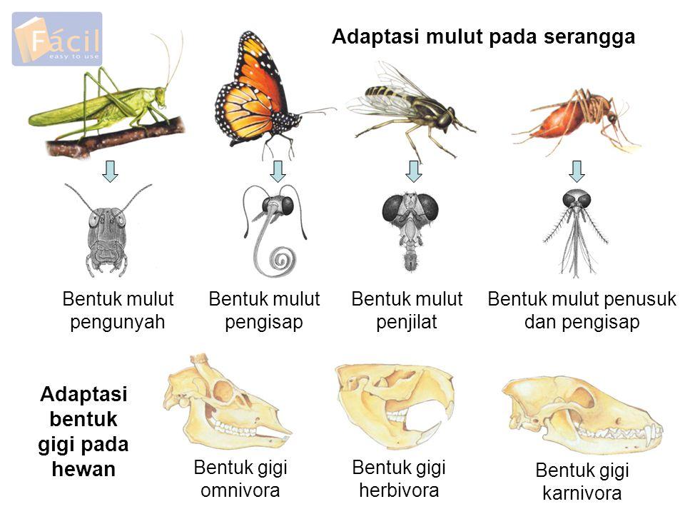 Adaptasi mulut pada serangga Adaptasi bentuk gigi pada hewan