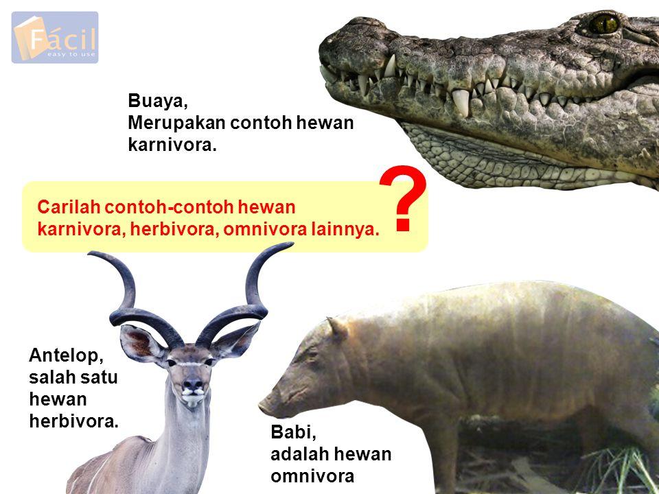 Buaya, Merupakan contoh hewan karnivora.