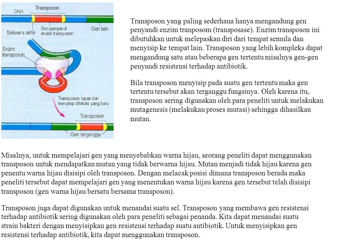 Transposon yang paling sederhana hanya mengandung gen