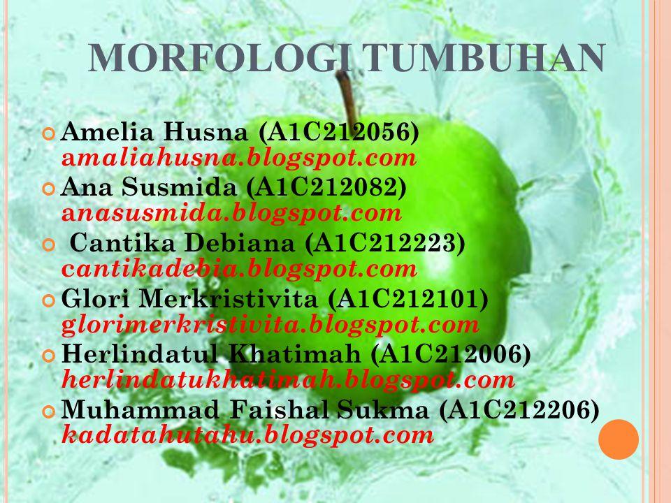 MORFOLOGI TUMBUHAN Amelia Husna (A1C212056) amaliahusna.blogspot.com