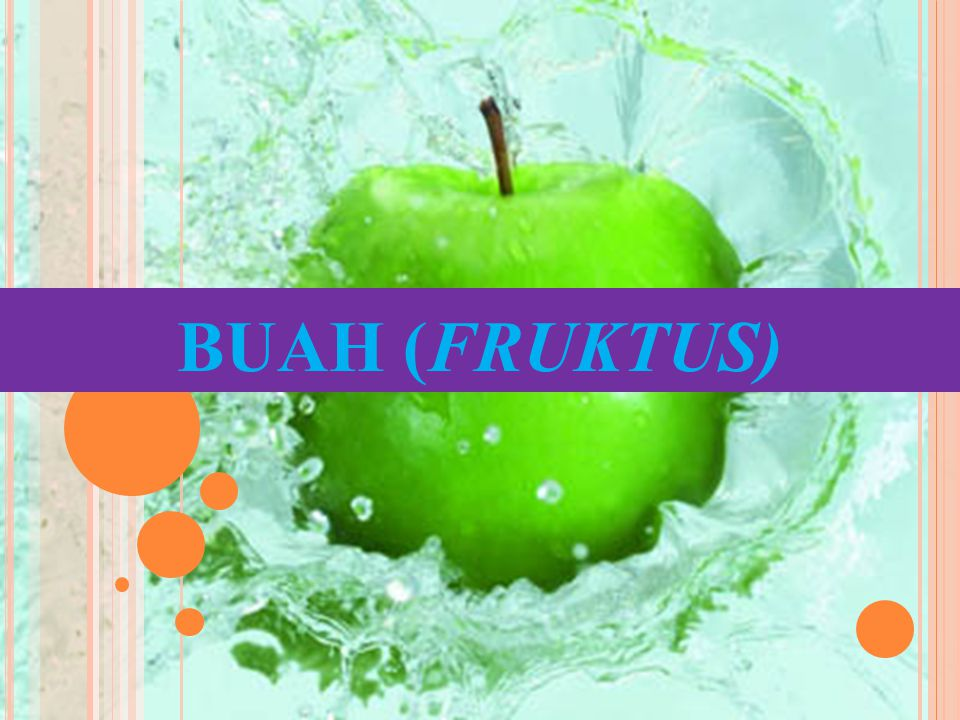 BUAH (FRUKTUS)