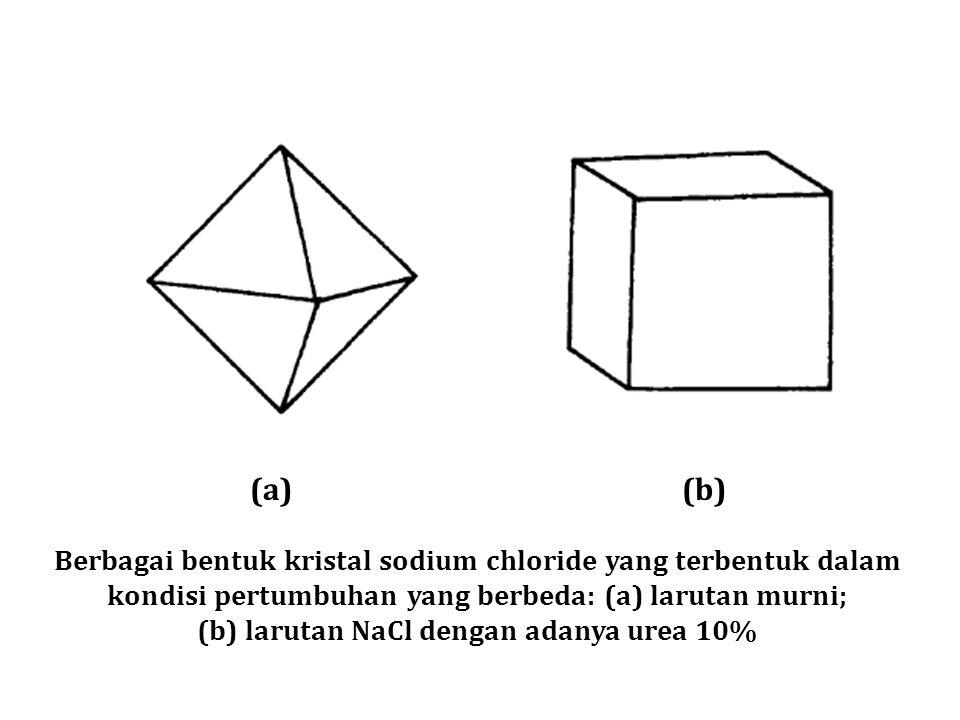 (b) larutan NaCl dengan adanya urea 10%