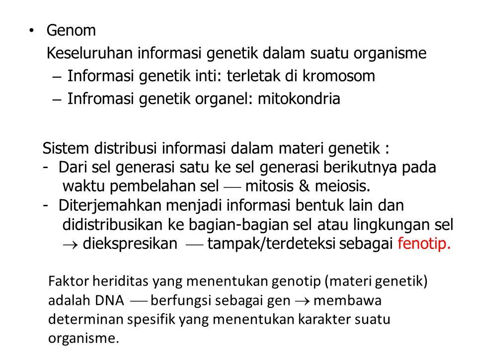 Genom Keseluruhan informasi genetik dalam suatu organisme. Informasi genetik inti: terletak di kromosom.