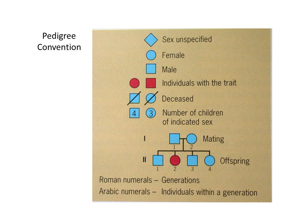 Pedigree Convention