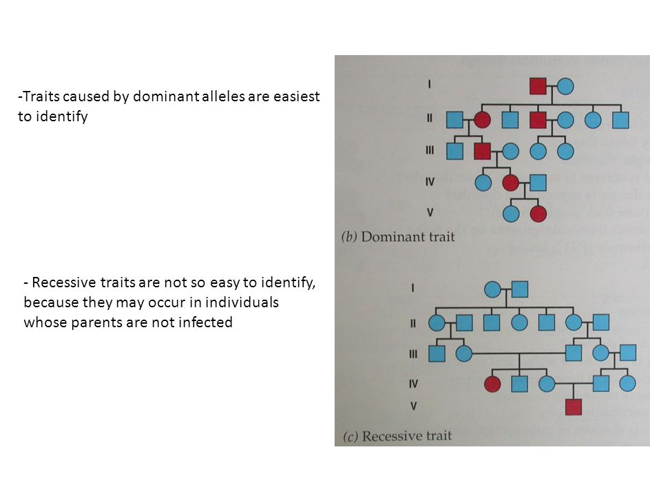 Traits caused by dominant alleles are easiest to identify