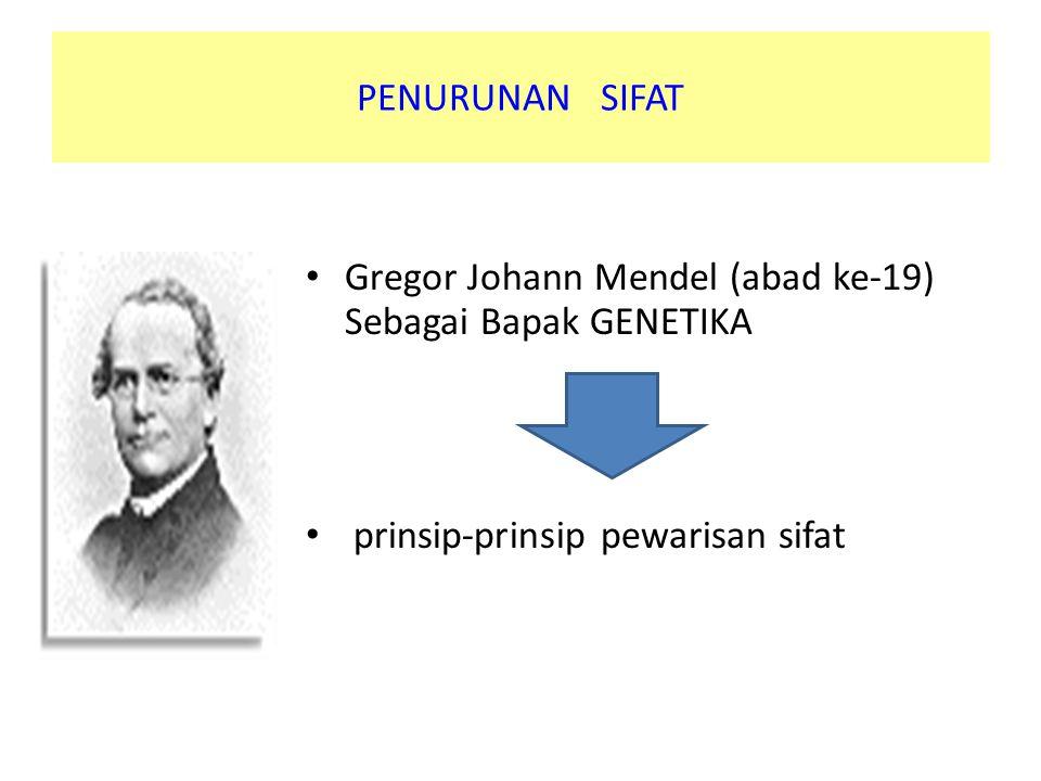 PENURUNAN SIFAT Gregor Johann Mendel (abad ke-19) Sebagai Bapak GENETIKA.