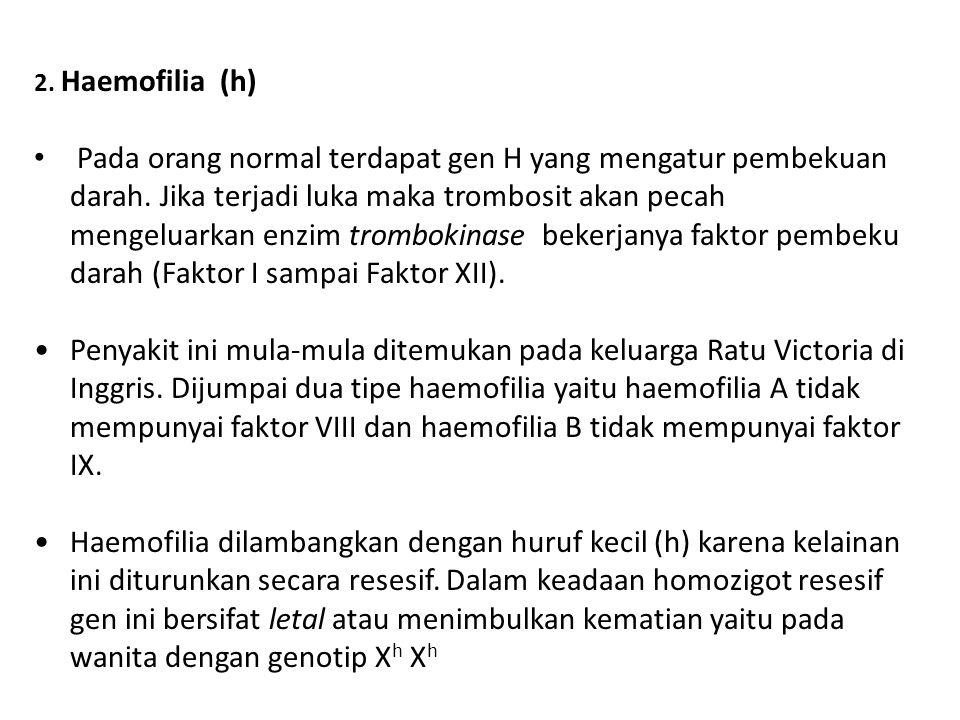 2. Haemofilia (h)