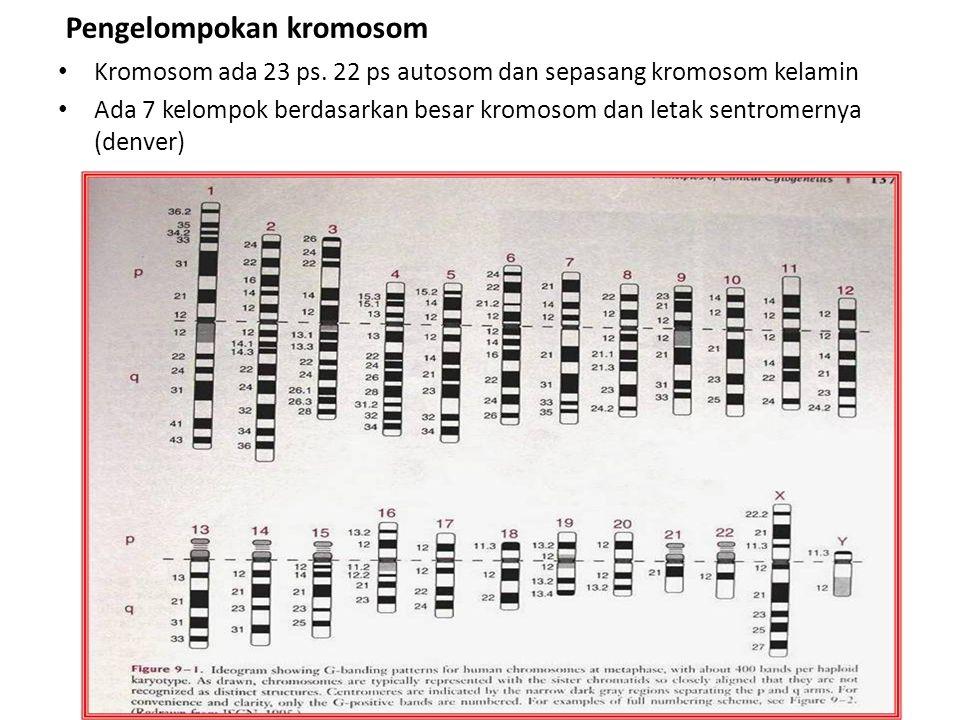 Pengelompokan kromosom