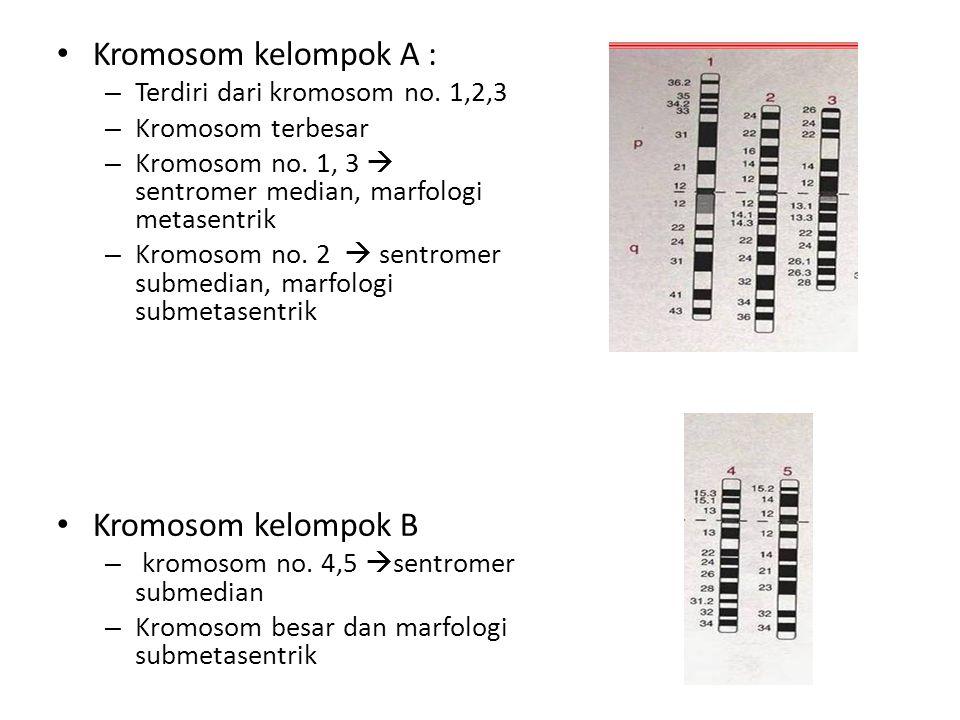 Kromosom kelompok A : Kromosom kelompok B
