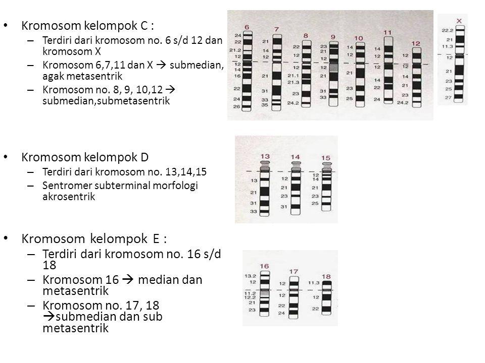 Kromosom kelompok E : Kromosom kelompok C : Kromosom kelompok D