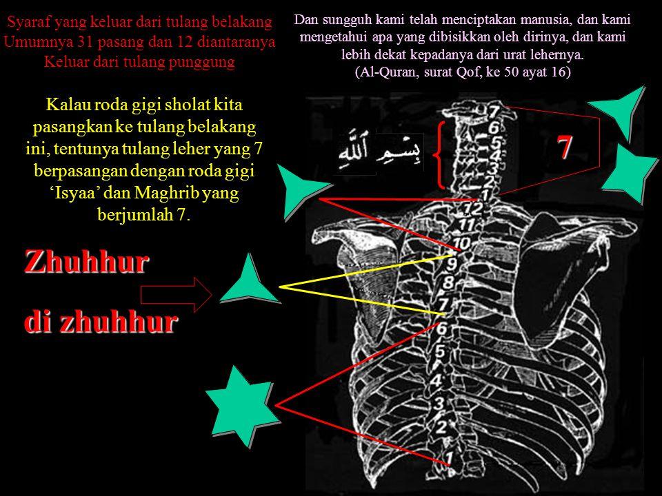 Syaraf yang keluar dari tulang belakang