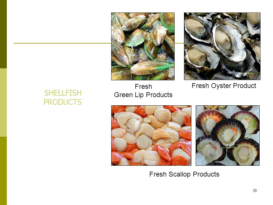 Fresh Scallop Products