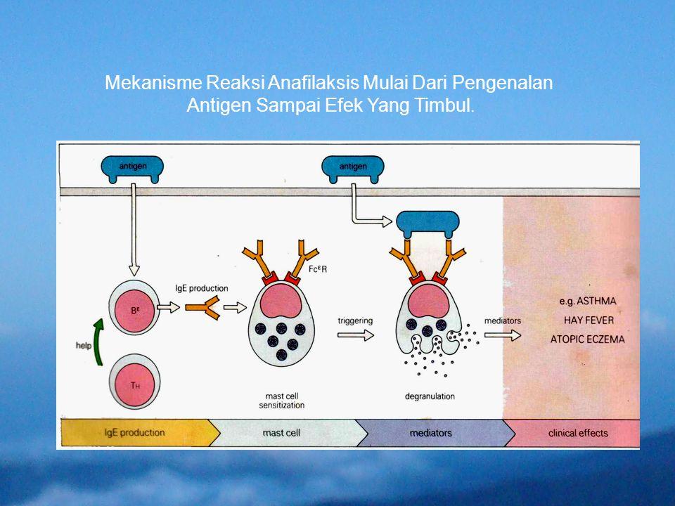 Mekanisme Reaksi Anafilaksis Mulai Dari Pengenalan