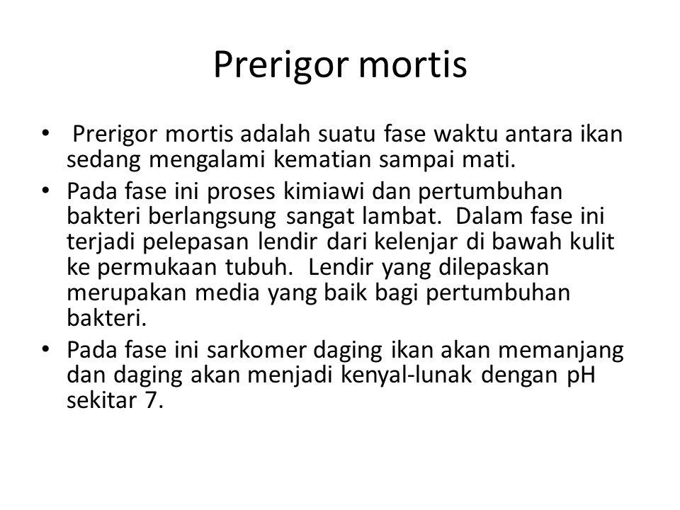 Prerigor mortis Prerigor mortis adalah suatu fase waktu antara ikan sedang mengalami kematian sampai mati.