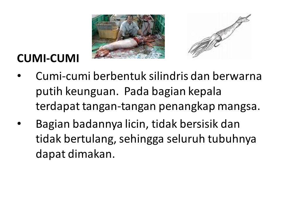 CUMI-CUMI Cumi-cumi berbentuk silindris dan berwarna putih keunguan. Pada bagian kepala terdapat tangan-tangan penangkap mangsa.