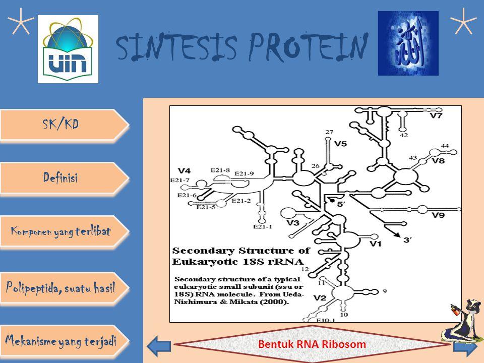 Komponen yang terlibat Polipeptida, suatu hasil