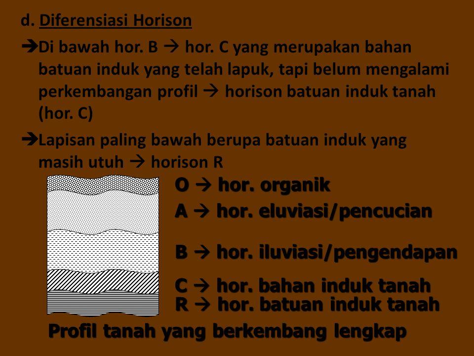 d. Diferensiasi Horison