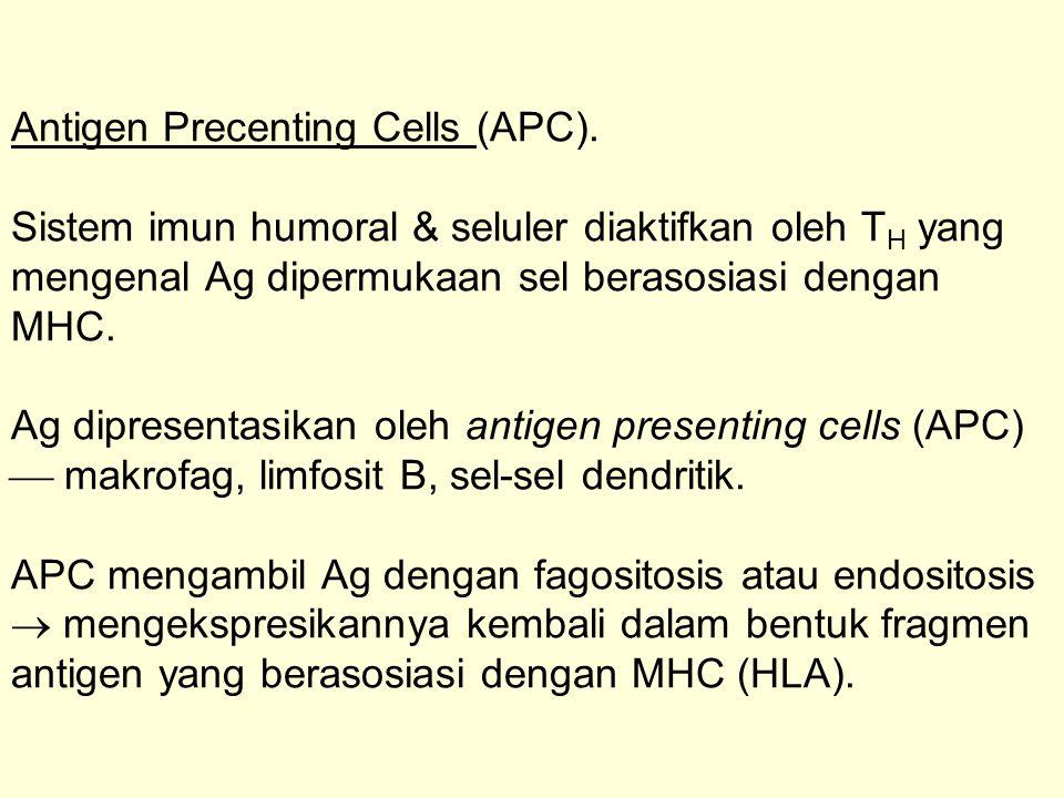Antigen Precenting Cells (APC)