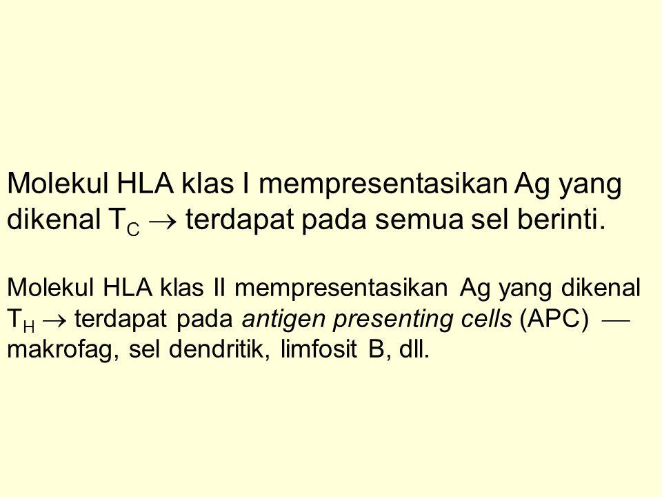 Molekul HLA klas I mempresentasikan Ag yang dikenal TC  terdapat pada semua sel berinti.