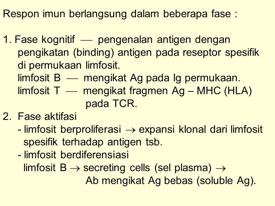 Respon imun berlangsung dalam beberapa fase : 1