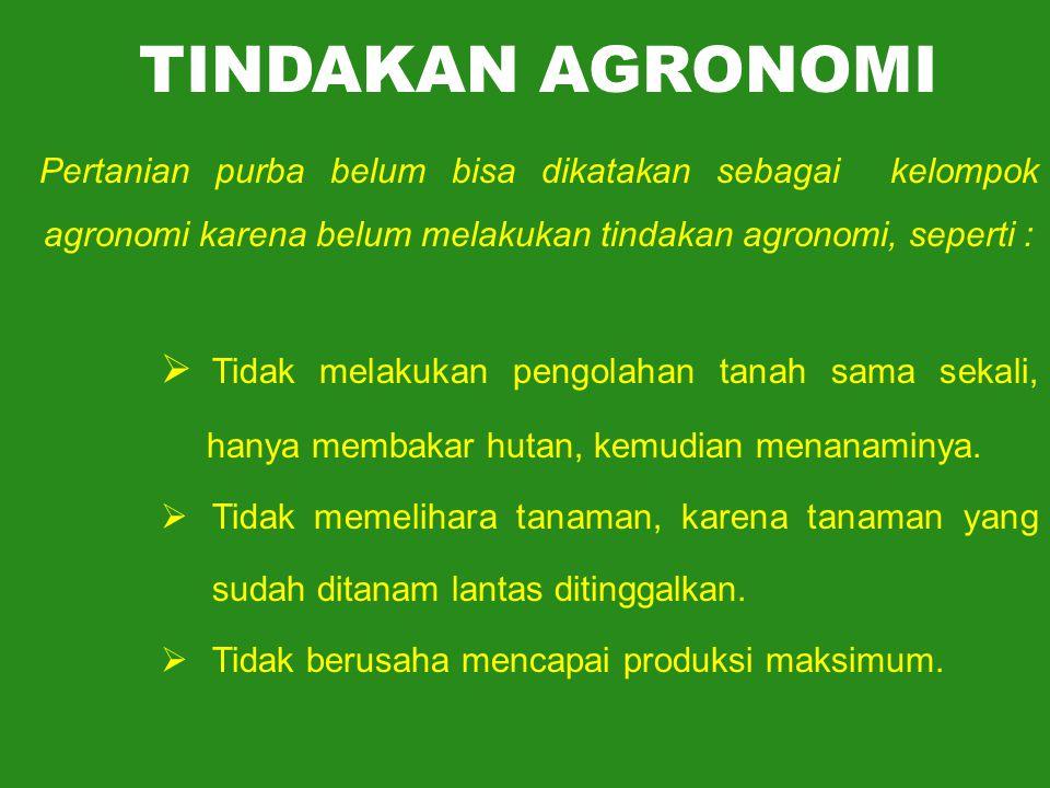TINDAKAN AGRONOMI Pertanian purba belum bisa dikatakan sebagai kelompok agronomi karena belum melakukan tindakan agronomi, seperti :