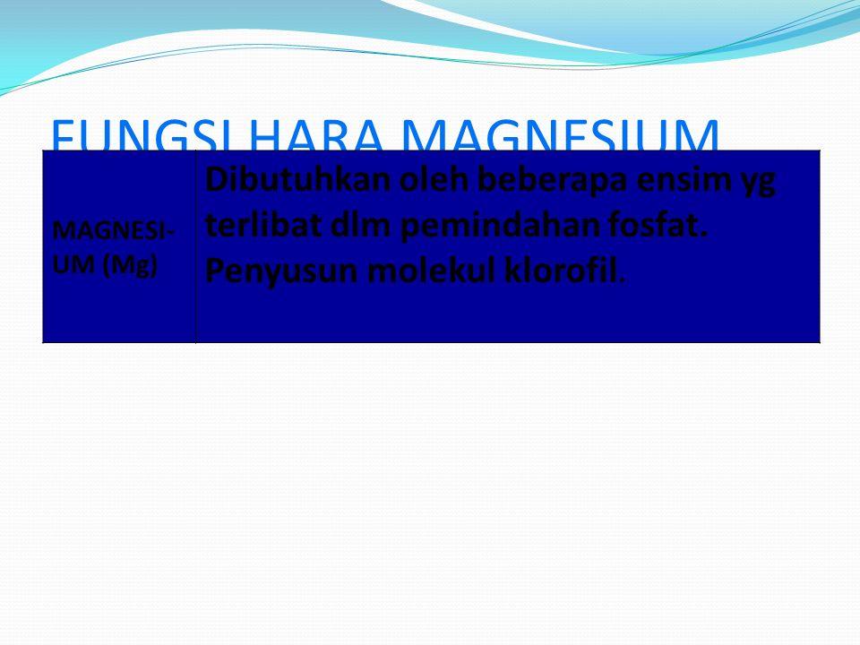FUNGSI HARA MAGNESIUM MAGNESI- UM (Mg) Dibutuhkan oleh beberapa ensim yg terlibat dlm pemindahan fosfat.