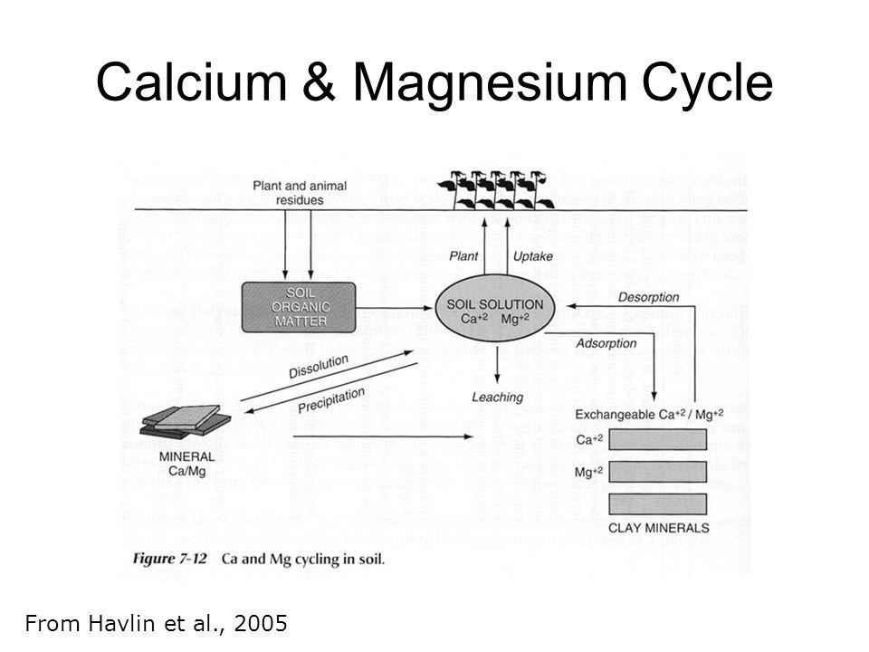 Calcium & Magnesium Cycle