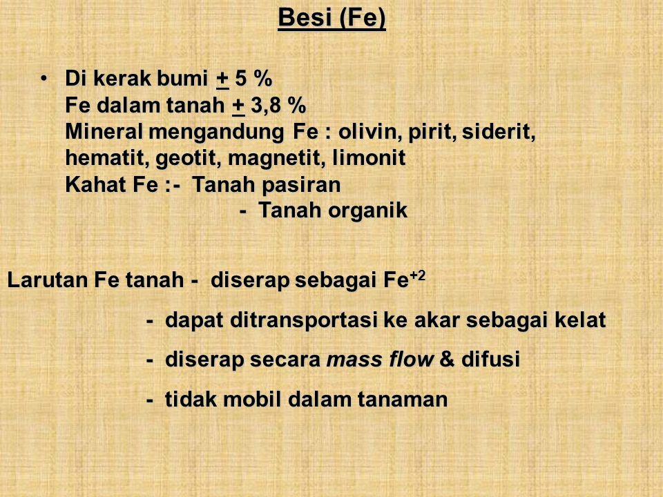 Besi (Fe)