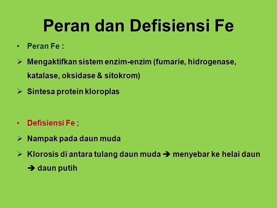 Peran dan Defisiensi Fe
