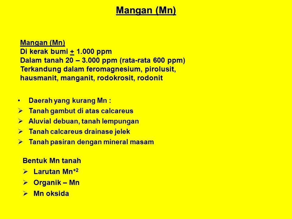 Mangan (Mn)