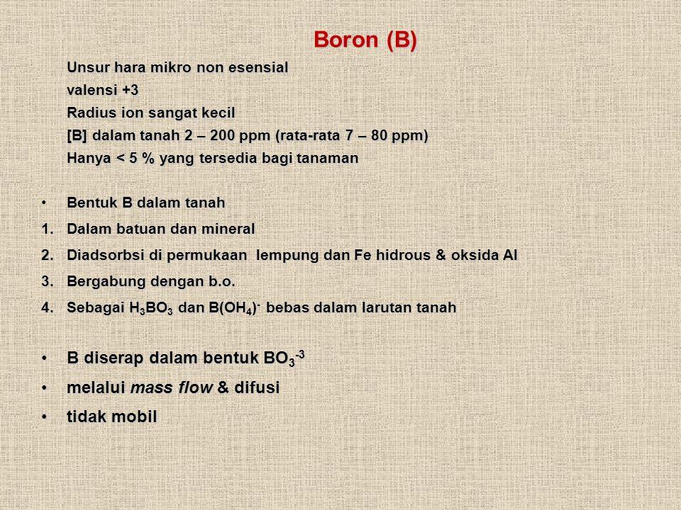 B diserap dalam bentuk BO3-3 melalui mass flow & difusi tidak mobil