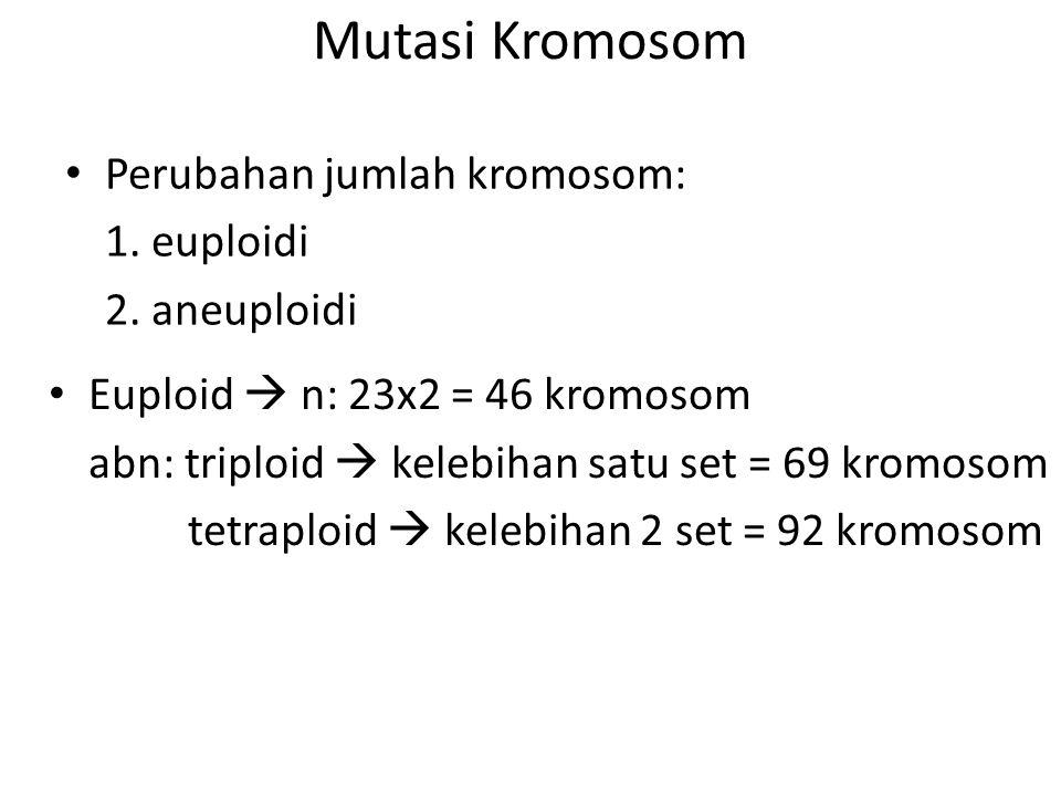 Mutasi Kromosom Perubahan jumlah kromosom: 1. euploidi 2. aneuploidi