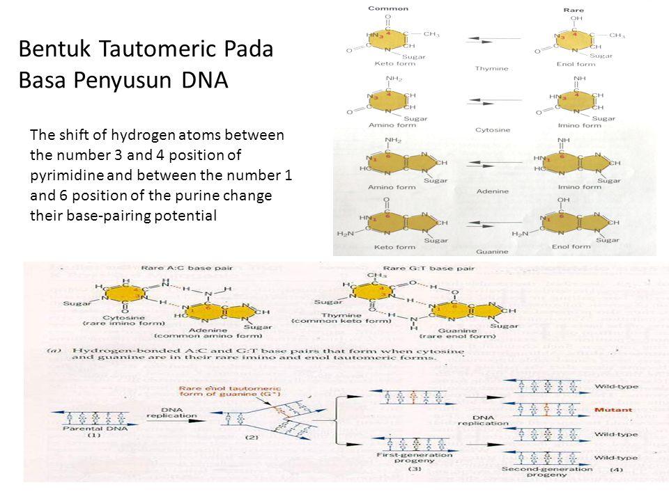 Bentuk Tautomeric Pada Basa Penyusun DNA