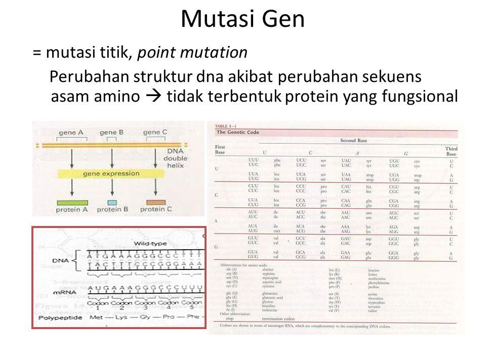Mutasi Gen = mutasi titik, point mutation Perubahan struktur dna akibat perubahan sekuens asam amino  tidak terbentuk protein yang fungsional